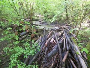 Entretenir régulièrement la rivière