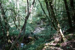 Ruisseau du Grand Vire – Bons en Chablais