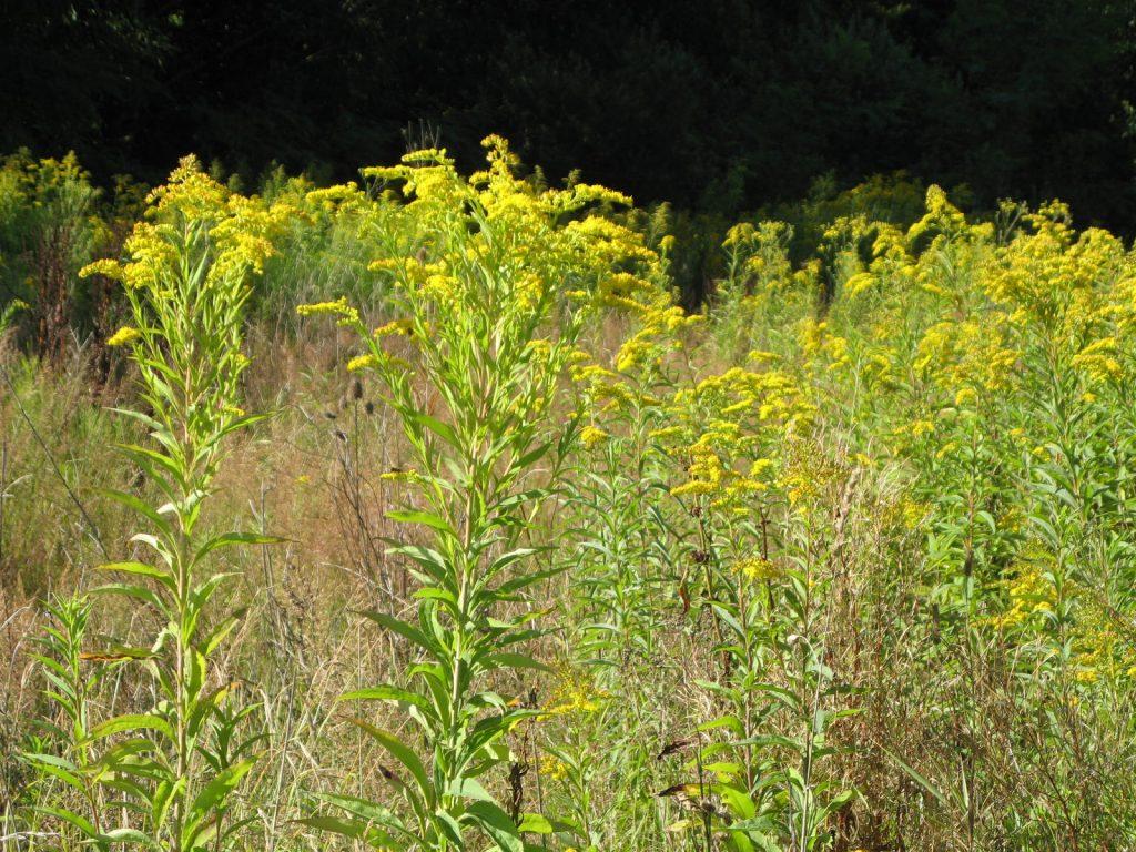 Une vidéo sur les plantes invasives du territoire